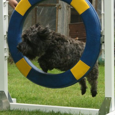 Gallery – Dog Agility